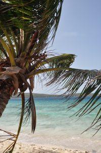 Zoni Beach bajo un palmar